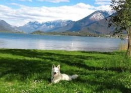 hund-ben-aaron-andrea-s--comersee